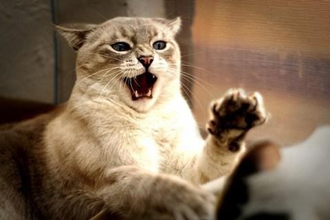 Que hacer si nuestro gato es agresivo