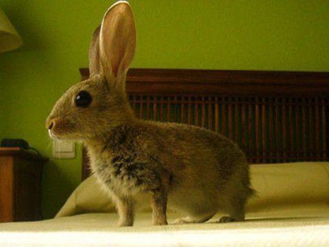 adoptar conejos