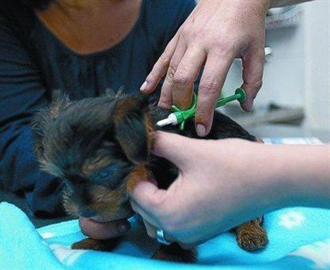 chip de identificacion en mascotas