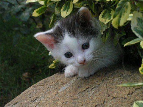 cuidar a un gato bebe