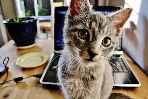 gato adolescente