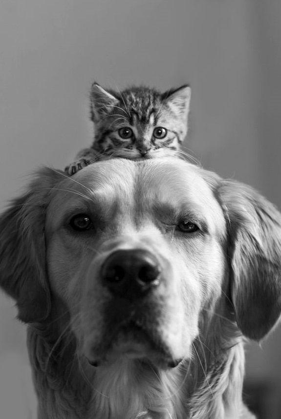 comunicacion animales