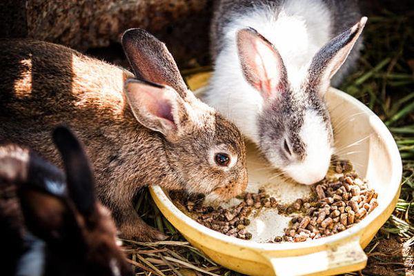 Alimentos evitar conejos