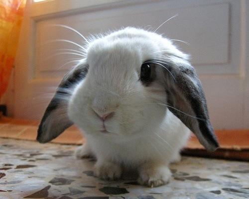 Nombres Para Conejos Animalesmascotas