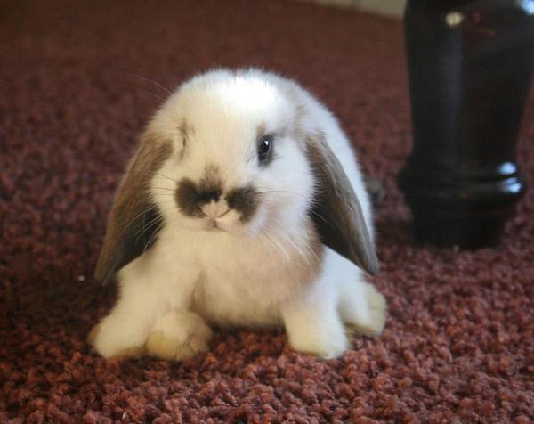 nombres-de-conejos