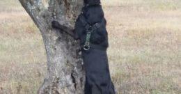 Perros de caza: Razas y características