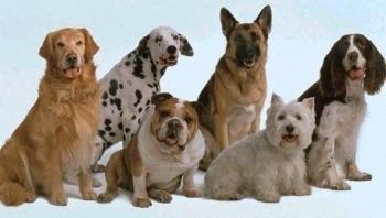 eleccion-raza-perro