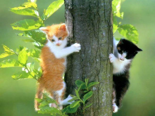 Extraer las uñas al gato - AnimalesMascotas