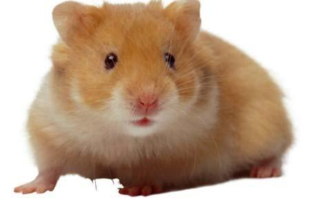 Para Animalesmascotas Los Caseros Juguetes El Hamster drCxtsQh