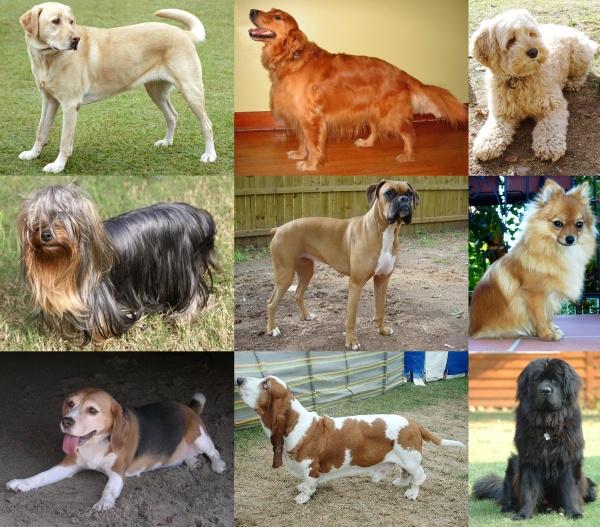 Cuando un perro se muere, cuando tu mascota se va para siempre