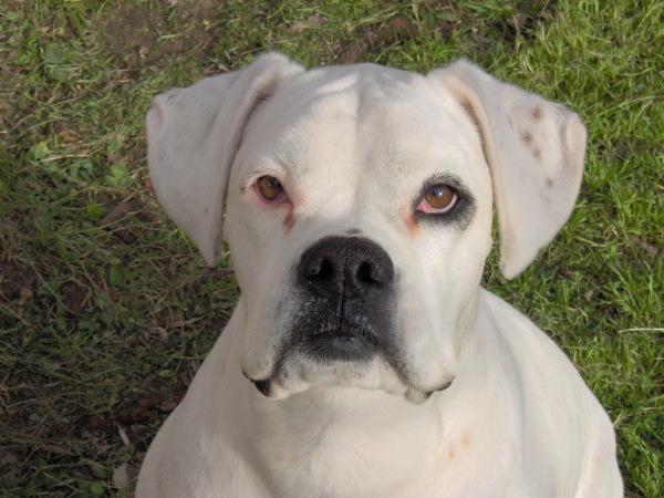 Nombres de perro  Hembras  AnimalesMascotas