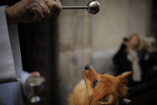 sananton-patron-de-los-animales