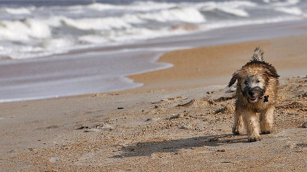 14-playas-de-espana-para-ir-con-tu-perro-playa-de-berria-santona