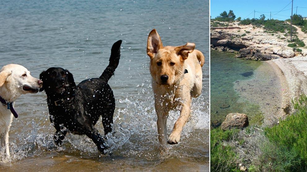 14-playas-de-espana-para-ir-con-tu-perro-playa-de-bon-caponet-ametlla-de-mar