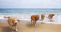 50 playas para perros 2017: Estas son las mejores playas para ir con tu perro