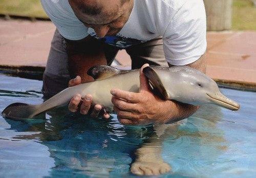 los-9-animales-mas-monos-del-mundo-delfin