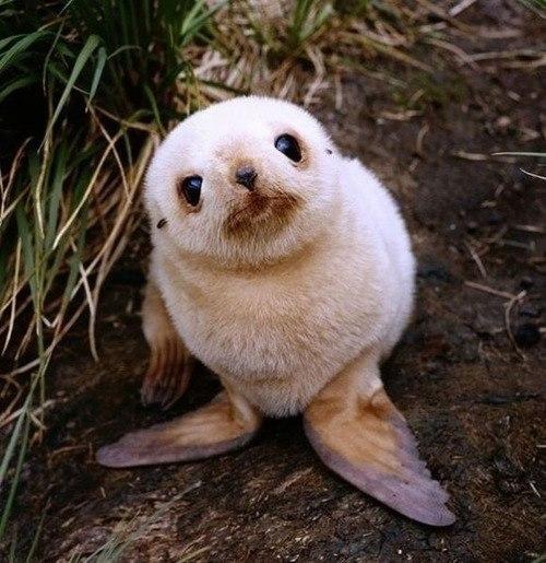 los-9-animales-mas-monos-del-mundo-foca
