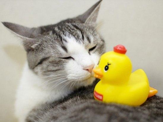 gato baño