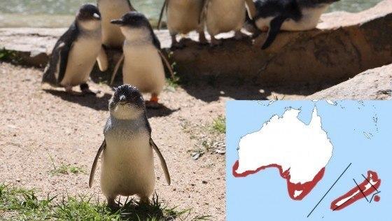 pinguino-de-hadas-2