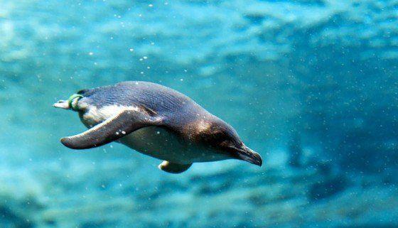 pinguino-de-hadas-3
