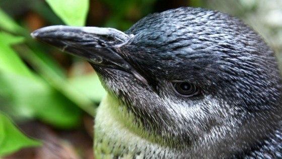 pinguino-de-hadas-5