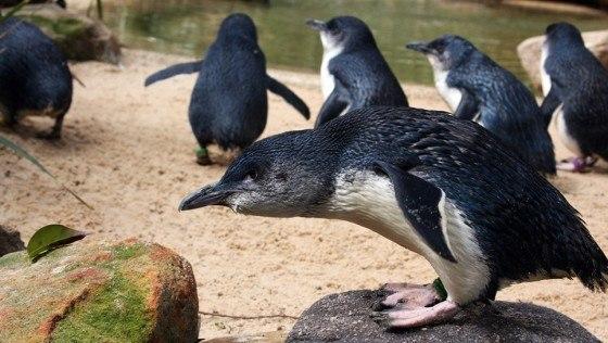 pinguino-de-hadas-8
