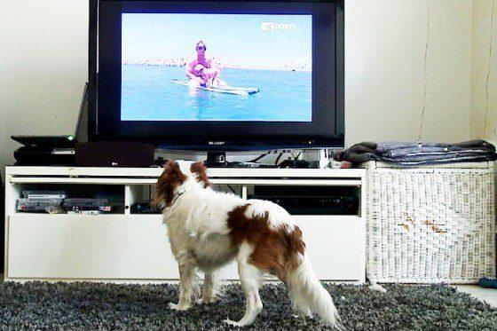 television-para-perros
