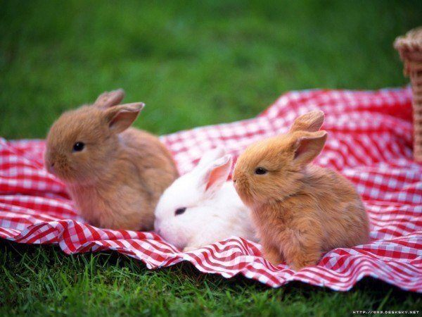 nombres-curiosos-y-extranos-para-mascotas-conejos