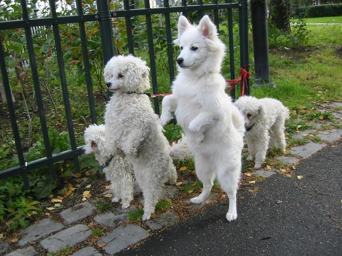 Nombres Curiosos Y Extraños Para Mascotas Animalesmascotas