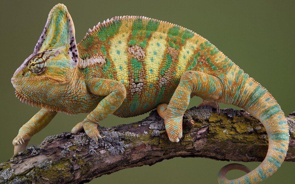 nombres-curiosos-y-extranos-para-mascotas-reptiles