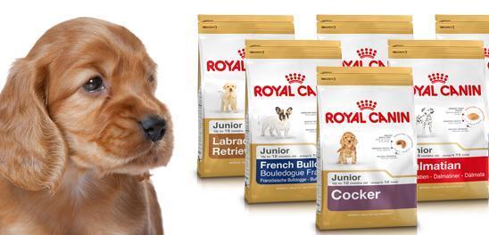comida-para-mascotas-de-mi-royal-canin