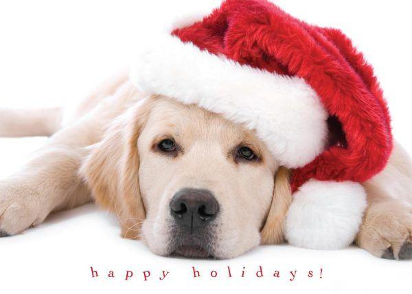 postales-de-animales-para-navidad-2015