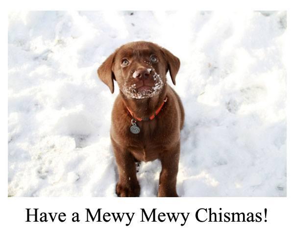 postales-de-animales-para-navidad-2015-cachorro-perro