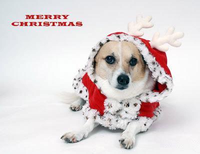 postales-de-animales-para-navidad-2015-perrito