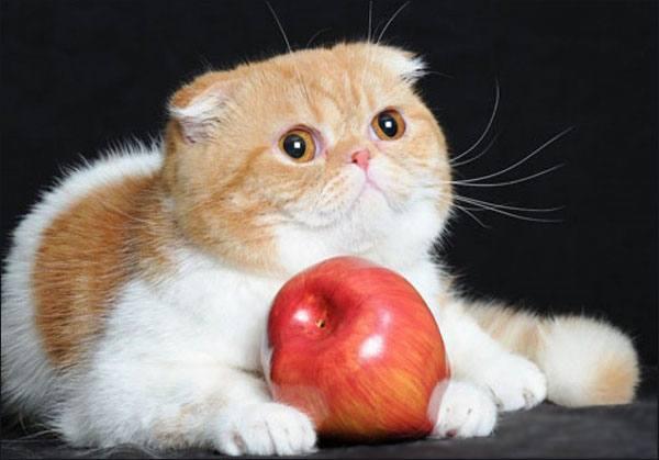 razas-de-gato-gatos-foldex