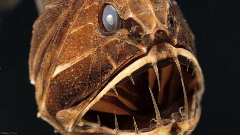 las-7-criaturas-mas-curiosas-y-extranas-del-oceano-pez-Fangtooth-2