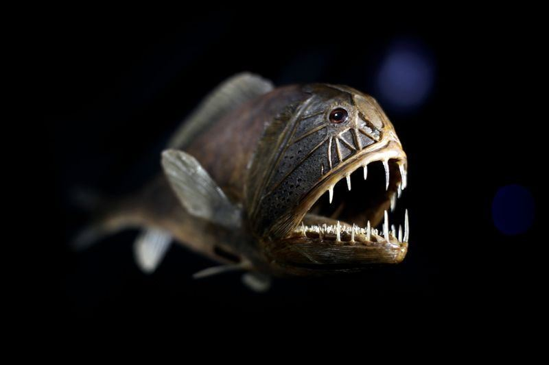 las-7-criaturas-mas-curiosas-y-extranas-del-oceano-pez-Fangtooth