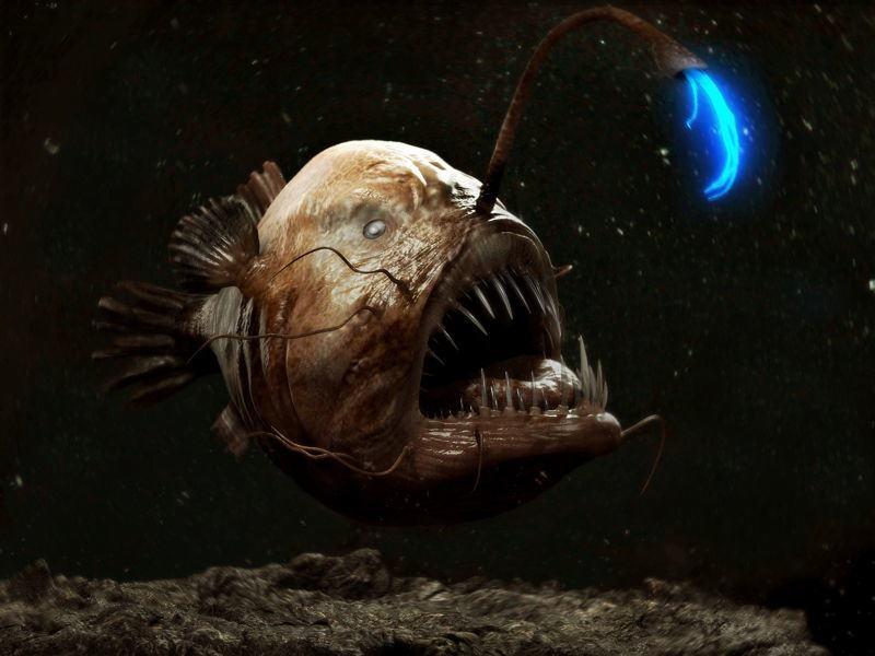las-7-criaturas-mas-curiosas-y-extranas-del-oceano-pez-rape