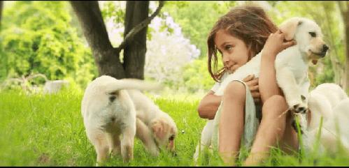 mascotas affinity