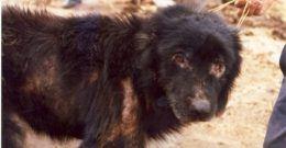 Leishmaniosis en Perros: Qué es, síntomas y tratamiento ¿Cómo evitarla?