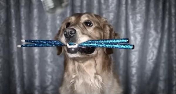 perros-cantando-por-una-causa-podrian-ser-heroes
