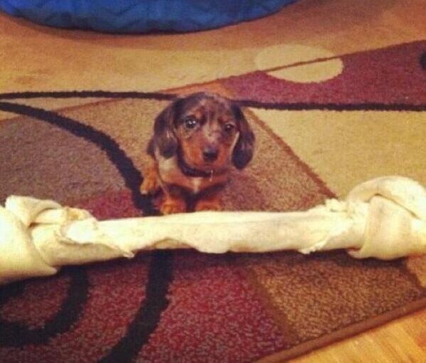 regalos-para-mascotas