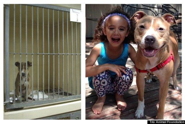 14-fotos-de-perros-rescatados-antes-y-despues-de-ser-adoptados-perro-abigail