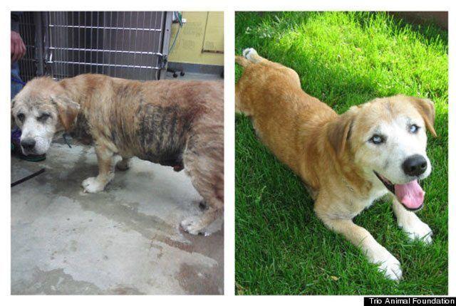 14-fotos-de-perros-rescatados-antes-y-despues-de-ser-adoptados-perro-albert-Trio-Animal-Foundation
