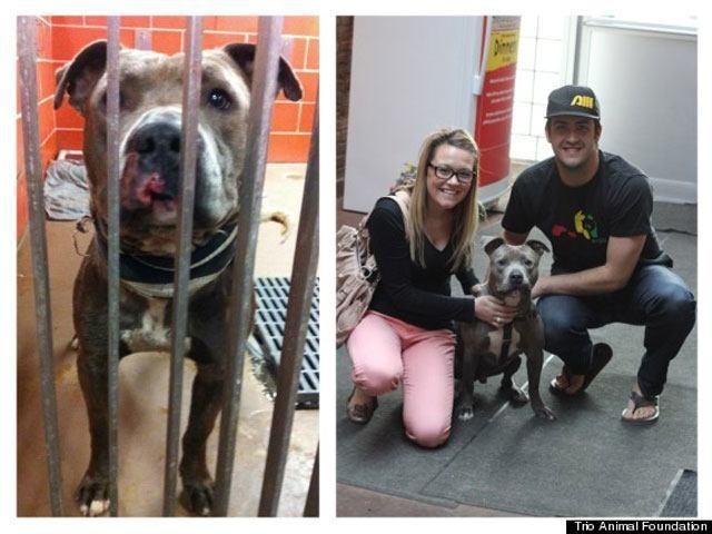 14-fotos-de-perros-rescatados-antes-y-despues-de-ser-adoptados-perro-bickell-Trio-Animal-Foundation