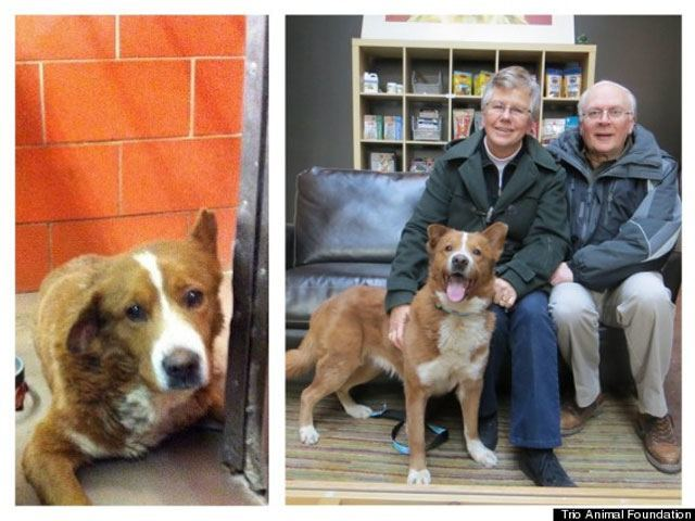 14-fotos-de-perros-rescatados-antes-y-despues-de-ser-adoptados-perro-bravo-Trio-Animal-Foundation