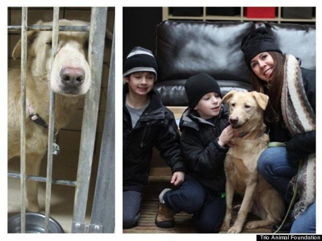 14-fotos-de-perros-rescatados-antes-y-despues-de-ser-adoptados-perro-buttercup-Trio-Animal-Foundation