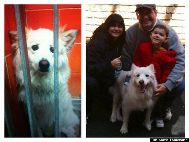 14-fotos-de-perros-rescatados-antes-y-despues-de-ser-adoptados-perro-frolik-Trio-Animal-Foundation