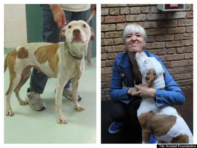 14-fotos-de-perros-rescatados-antes-y-despues-de-ser-adoptados-perro-livy-Trio-Animal-Foundation