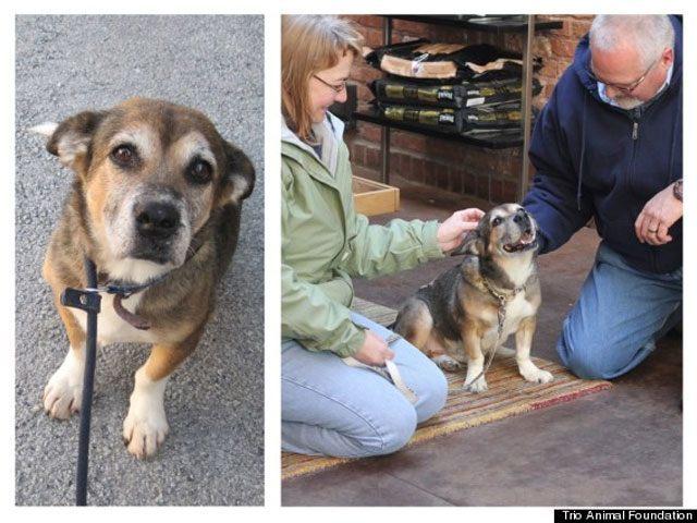 14-fotos-de-perros-rescatados-antes-y-despues-de-ser-adoptados-perro-rosie-Trio-Animal-Foundation